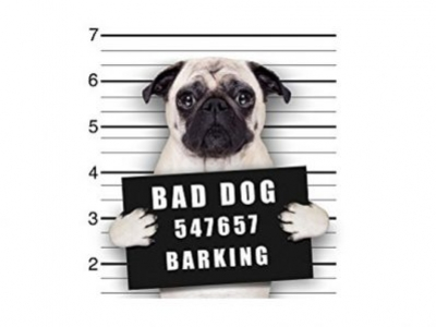 Did You Give Your Dog a Dirty Name?