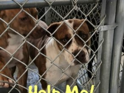 ALA. LAW ENFORCEMENT AND DISTRICT ATTORNEYS NEED YOUR SUPPORT FOR ANIMAL SHELTER BILL HB 305