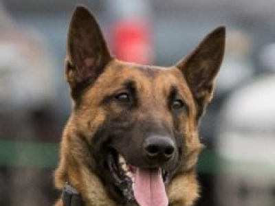 NEW K9 MAKES DRUG ARREST