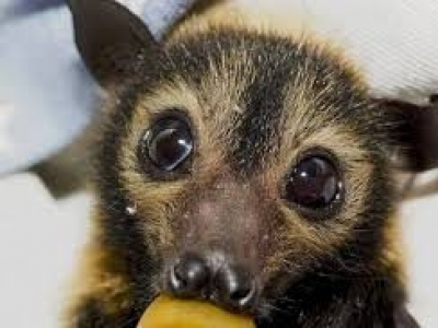 Do not handle bats, ADPH cautions