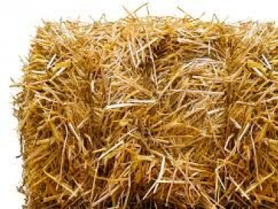 Wheat Straw/Hay Desperately Needed at Colbert Animal Shelter